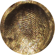 the-golden-fingerprint-duvoneymusic_favicon